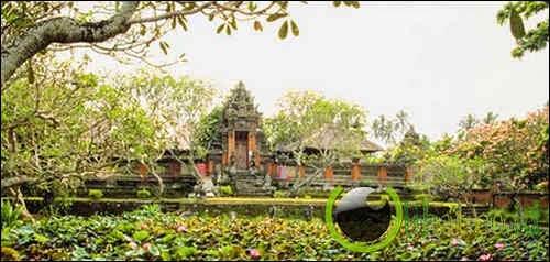 The Lotus Tree (pohon lotus)