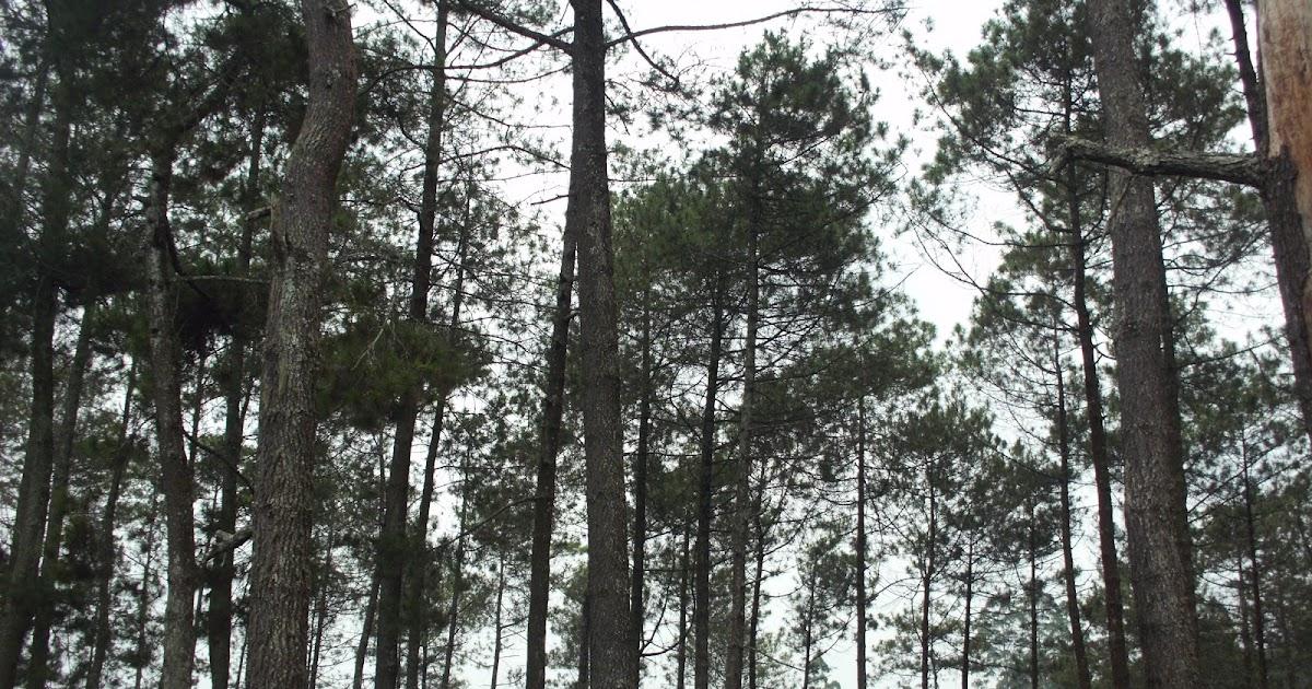 Main di hutan - 1 1