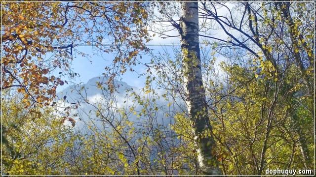 rừng lá mùa thu thật đẹp
