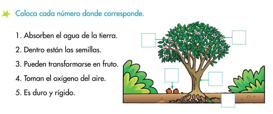 http://www.primerodecarlos.com/SEGUNDO_PRIMARIA/enero/tema1/actividades/CONO/plantas5.swf