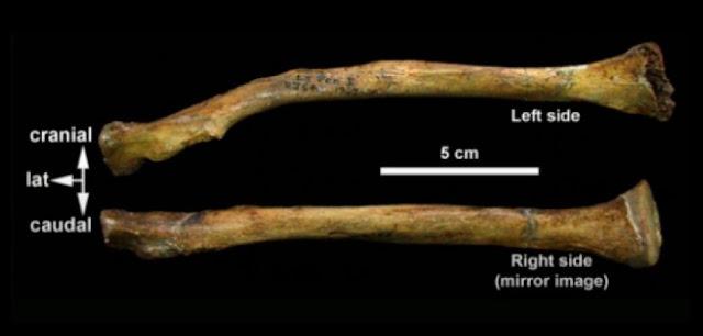 New technology reveals secrets of famous Neanderthal skeleton La Ferrassie 1