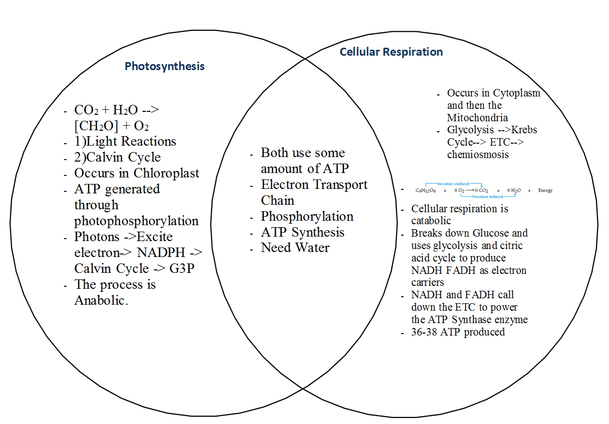 Sean Nguyen Biology Ap Blog Photosynthesis And Cellular Respiration Comparison