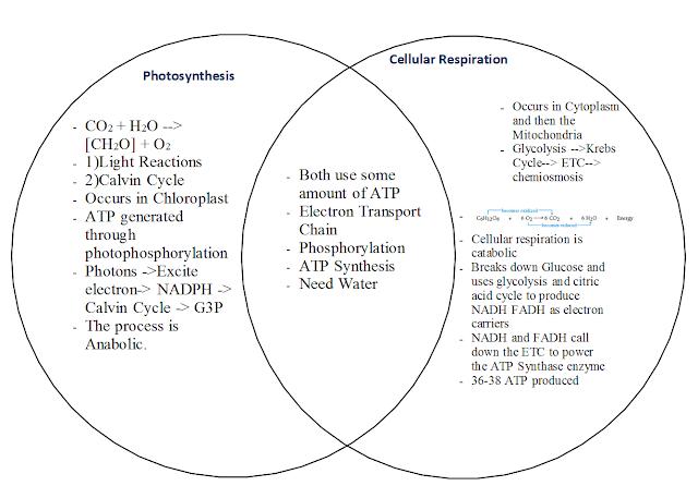 photosynthesis vs cellular respiration venn diagram