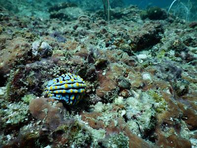 photo of a nudibranch using a Nikon Coolpix AW130