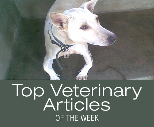 Top Veterinary Articles of the Week: Cholecalciferol Intoxication, Borborygmi, and more ...