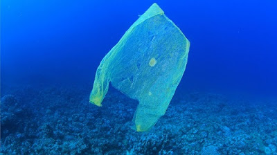 Plastic Pollution | Causes and Effects | Solutions | Projects | Wiki | Articles