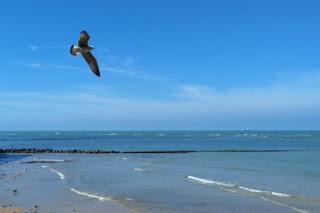 Gaviota volando sobre escena de playa.