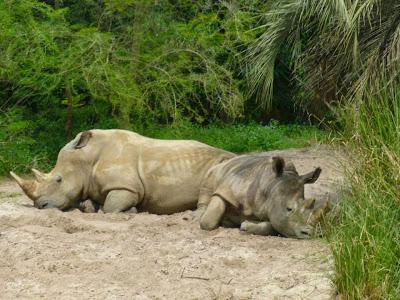 Kilimanjaro Safaris Animal Kingdom Orlando Floride