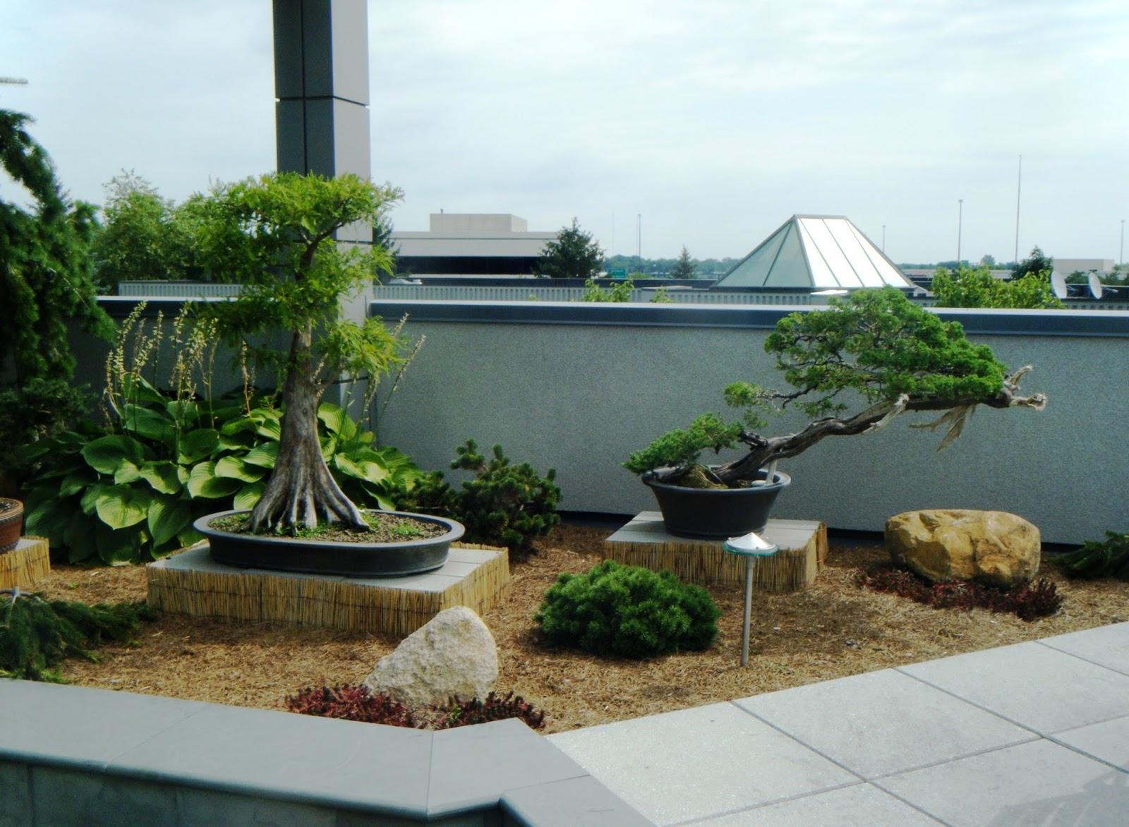Bonsai Tree 22 Amazing Miami Tropical Bonsai Photos