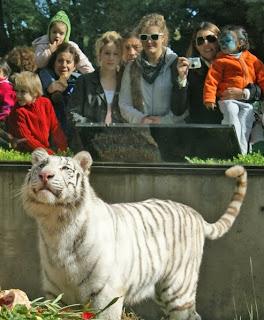 zoo animal2 788103