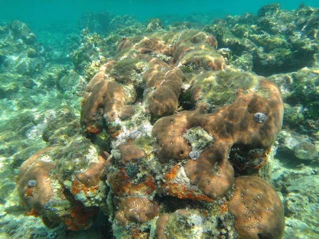 Arrecife de coral de Naranjo Chico en Kuna Yala