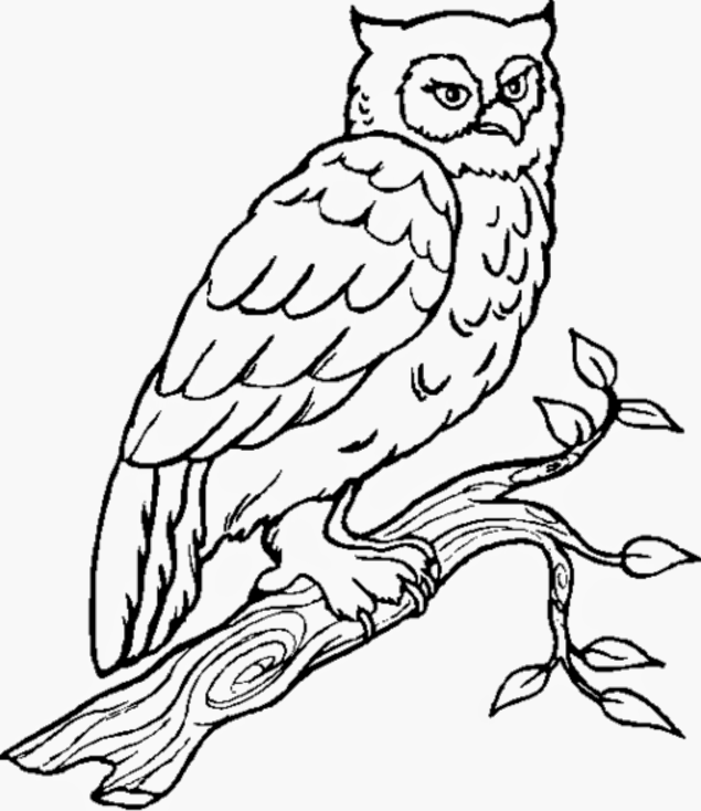 retro owl coloring pages | Owl Coloring Pages - All About OWL