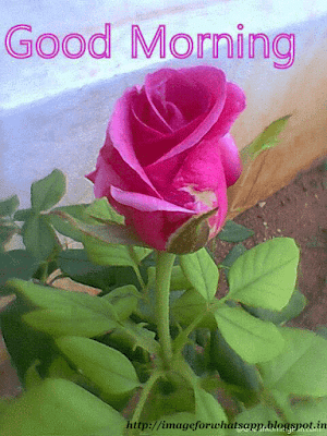 Good Morning Wishes with bunch of flowers