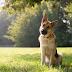Επιστήμονες αποκωδικοποιούν τις εκφράσεις προσώπου του σκύλου.