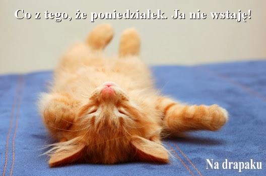 Ja nie wstaję!