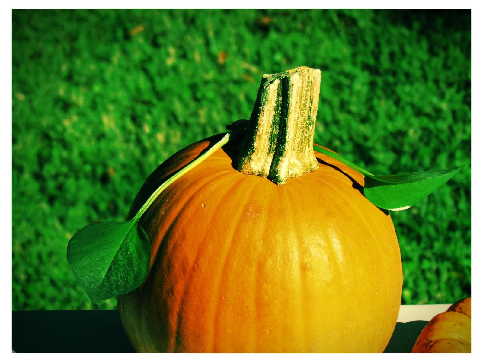 Autumn Halloween Pumpkin Lomo Art Polaroid Picture