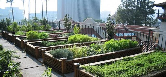 छत पर खेती कर साल भर में कमा लिए 4 करोड़ रुपए - newsonfloor.com
