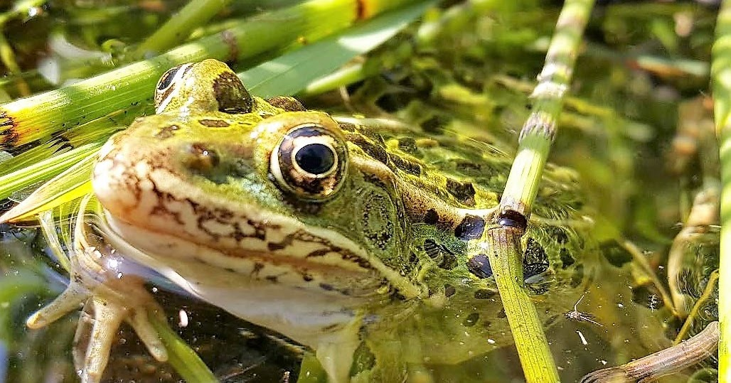 Pincher Creek Voice  Leopard Frog workshop held at Beaver Mines and  Beauvais Lake c470e7acb