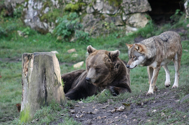 Romania bans trophy hunting of brown bears, wolves, lynx and wild cats