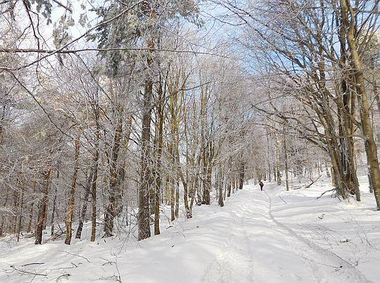 Droga miarowo pnie się po leśnym stoku.