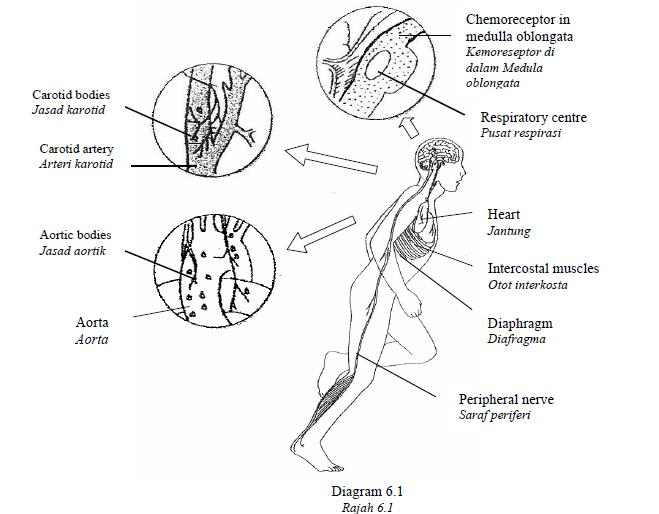 Rozaini Othman (Guru Cemerlang Biologi): Sample SPM