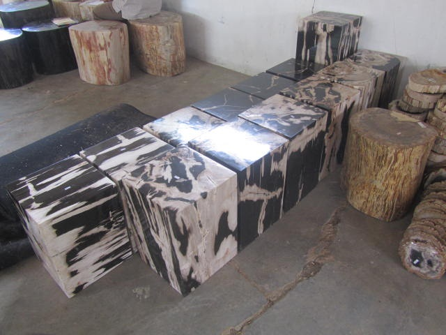 petrified wood of full polish box models