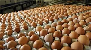 Viral Video Telur Palsu,Ini Faktanya