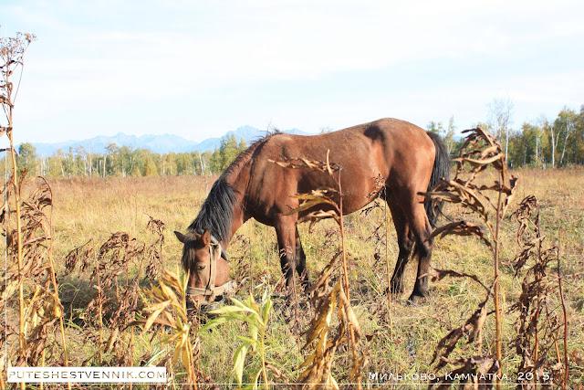 Лошадь в траве