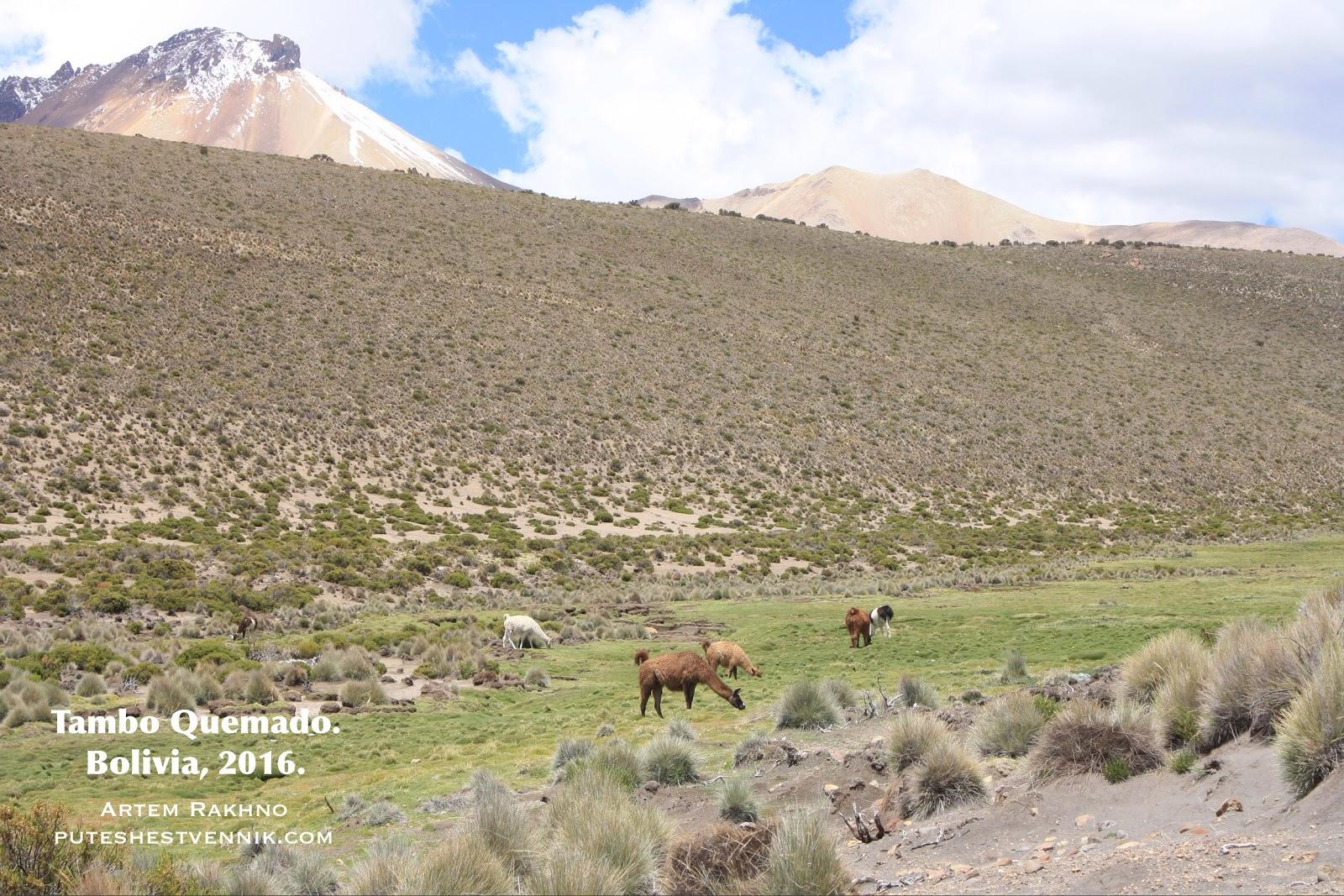Ламы пасутся в горах