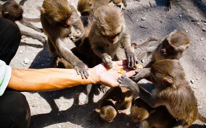 Đảo khỉ Hòn Lao - Nha Trang