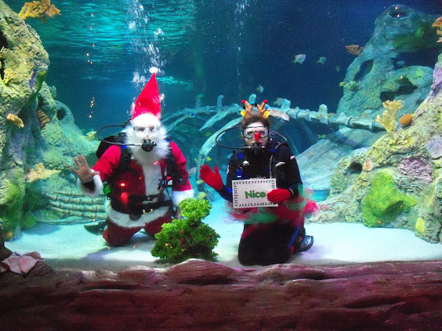 On select dates in December, you can visit the SEA LIFE Aquarium in Grapevine, Texas & watch Santa & his elf scuba dive among the sharks, fish, & sting ray in their 160,000-gallon ocean tank.