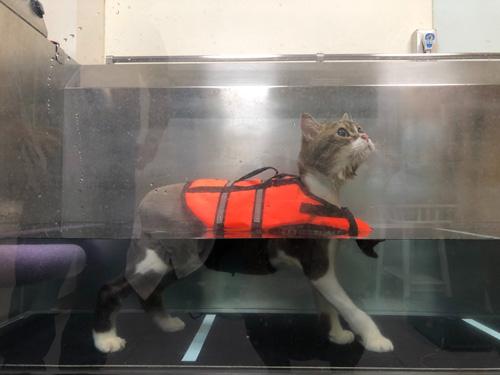 高雄苓雅區恩澤動物醫院力推犬貓復健醫療。