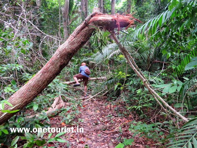 saddle peak trek , andaman and nicobar