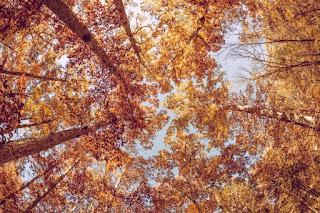 Осенний листопад любви