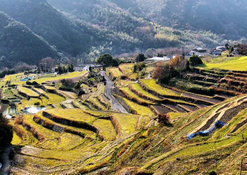 Nakayama Senmai Da, one of the top 100 ride paddy terraces in Japan.