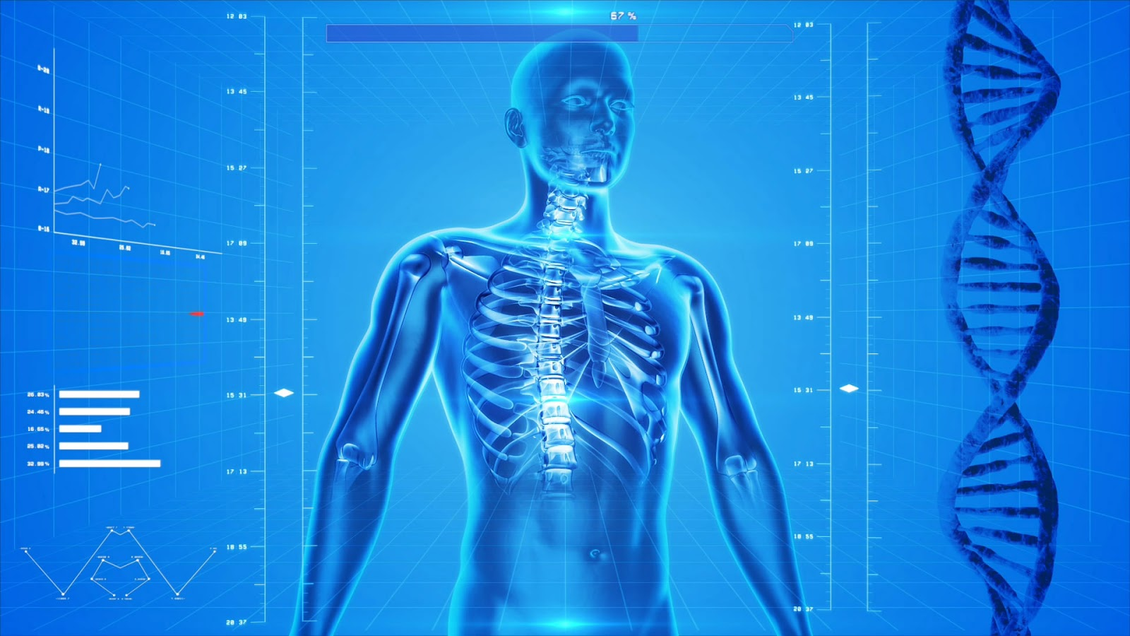 Huesos en el cuerpo humano