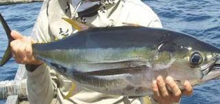 Jenis-jenis Ikan Ekonomis Penting di Laut Indonesia