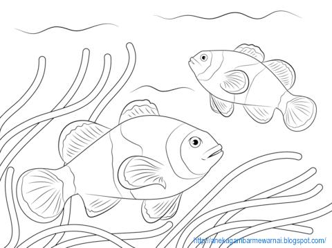 550+ Gambar Hewan Laut Untuk Anak Tk Gratis Terbaru