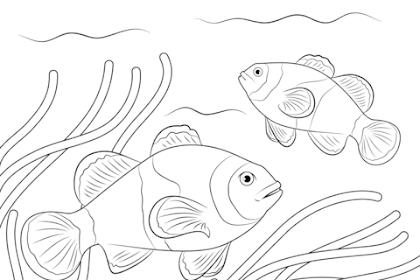 Mewarnai Gambar Ikan Di Laut