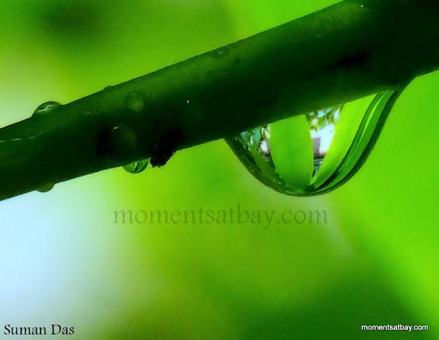 Monsoon-dedication a Rain-drop momentsatbay