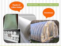 Manfaat Plastik UV untuk Budidaya Tanaman Cabai