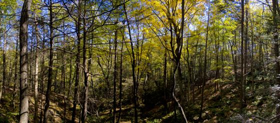 Trout Valley Preserve - Aspetuck Land Trust - Easton CT
