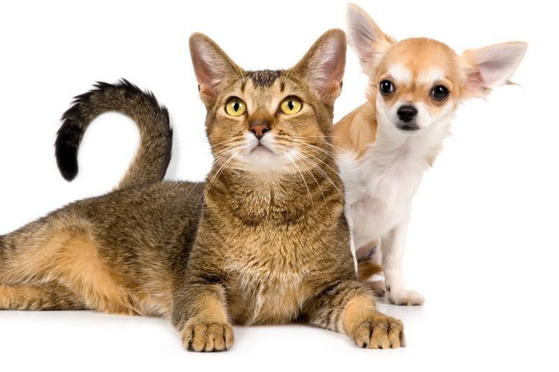 Comit logement d 39 aide aux locataires mon proprio ne veut rien savoir des animaux que faire - Mon ado ne veut rien faire ...