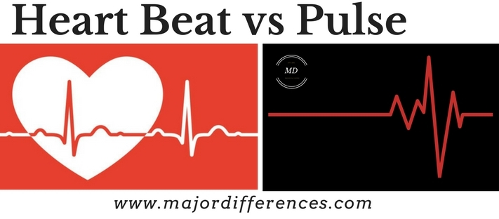 Difference between Heart beat and Pulse (Heart beat vs Pulse)