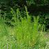 Prehistoric fern?