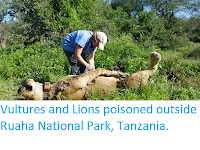 http://sciencythoughts.blogspot.co.uk/2018/02/vultures-and-lions-poisoned-outside.html