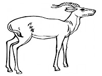 Download Printable Antelope Kids Coloring Pages