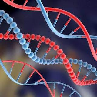 New secrets of DNA اسرار جديدة للحمض النووي
