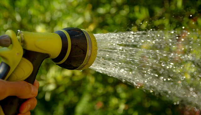 Sering Diabaikan Orang, Cara Menyiram Tanaman Yang Tepat