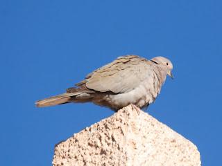 56e7a5b2f SaLiDaS a La NaTuRaLeZa  Viaje a Marruecos (2º parte) Ouarzazate